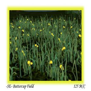 -SE- Buttercup Field